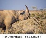 Portrait Of Large Endangered...