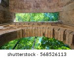 detail the arc of the ears or...   Shutterstock . vector #568526113
