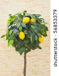 Laden lemon tree in front of stone background - stock photo