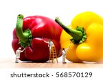 painters coloring bell pepper.... | Shutterstock . vector #568570129