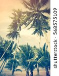 coconut palm tree on the beach... | Shutterstock . vector #568575109