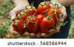 the hand of a farmer exhibition ... | Shutterstock . vector #568586944