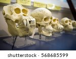 Skulls In A Raw Showing Humans...