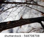 Wild Rose Thorn Over Winter