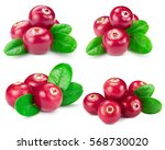 cranberries collection isolated ...   Shutterstock . vector #568730020