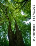 green tops of trees | Shutterstock . vector #568761013