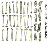 human bones skeleton drawing... | Shutterstock .eps vector #568810090