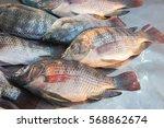 fresh yummy nile tilapia in... | Shutterstock . vector #568862674