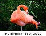 flamingo   Shutterstock . vector #568910920
