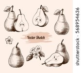 vector pears hand drawn sketch... | Shutterstock .eps vector #568954636