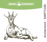 sketch of goat drawn by hand.... | Shutterstock .eps vector #568972180