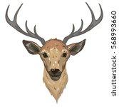 deer   vector illustration | Shutterstock .eps vector #568993660