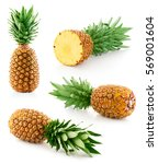 pineapple fruit isolated on...   Shutterstock . vector #569001604