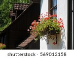 bright petunia flowers on a... | Shutterstock . vector #569012158
