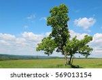 light green deciduous tree... | Shutterstock . vector #569013154