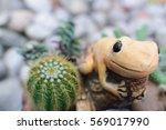 Fairy Garden Cactus With...