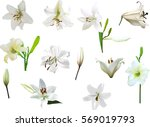 illustration with lily flowers... | Shutterstock .eps vector #569019793