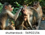 Mother And Baby Macaque Sit...