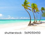 Coconut Palm Trees On White...