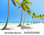 coconut palm trees on white... | Shutterstock . vector #569050498
