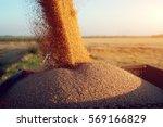 Harvester Unloading Wheat.