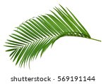 green leaf of palm tree... | Shutterstock . vector #569191144