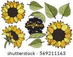 sunflower. vector set of hand... | Shutterstock .eps vector #569211163