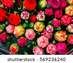 flower stall at the cours... | Shutterstock . vector #569236240