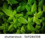 leaf | Shutterstock . vector #569286508