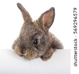 Stock photo rabbit with blank billboard isolated on white 569296579
