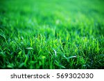 Background Texture Of Fresh...