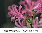 close up of the flowering...   Shutterstock . vector #569305474