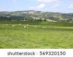 hillside in wales  great britain | Shutterstock . vector #569320150