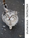 Small photo of Alley cat. Closeup. To help homeless animals, especially in winter!