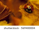 View Of Lonely Ladybird On A...