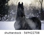 Stock photo horse galloping on snow 569422708