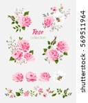 Stock vector beautiful isolated pink flowers on the white background set of different floral design elements 569511964