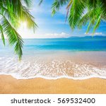 palm and tropical beach | Shutterstock . vector #569532400