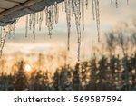 beautiful icicles shine in sun...