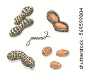 isolated peanuts on a white... | Shutterstock .eps vector #569599804