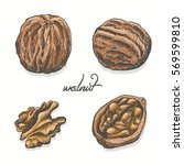 isolated walnut on a white... | Shutterstock .eps vector #569599810