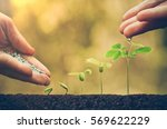 agriculture. plant seedling.... | Shutterstock . vector #569622229
