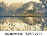 grass flowers vintage   Shutterstock . vector #569770174