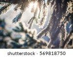 winter scene   frosted pine... | Shutterstock . vector #569818750