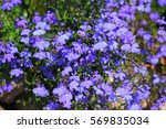 Beautifully Colored Flowers In...