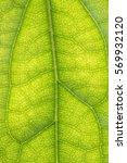 green leaf textured | Shutterstock . vector #569932120