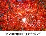 Sun Light Through The Red Fall...