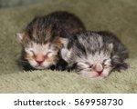 Stock photo newborn kittens 569958730