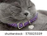 portrait of a sleeping cat in a ...   Shutterstock . vector #570025339
