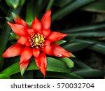 Vibrant Red Scarlet Star...